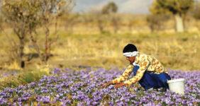 صنعت کشاورزی، نمود توسعه پایدار