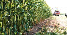 ثروت آفرینی در کشاورزی