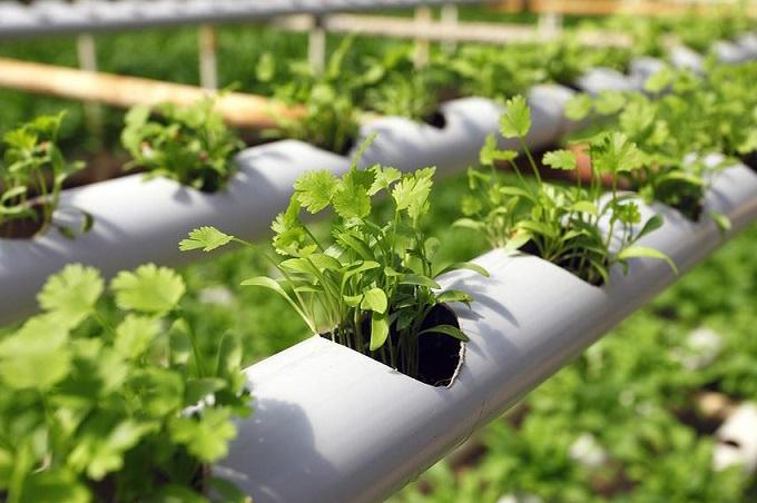 کشاورزی بدون خاک