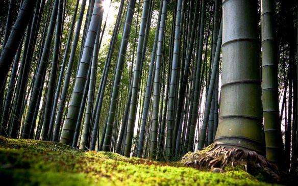 درخت چینی بامبو : درسی مهم برای کارآفرینان