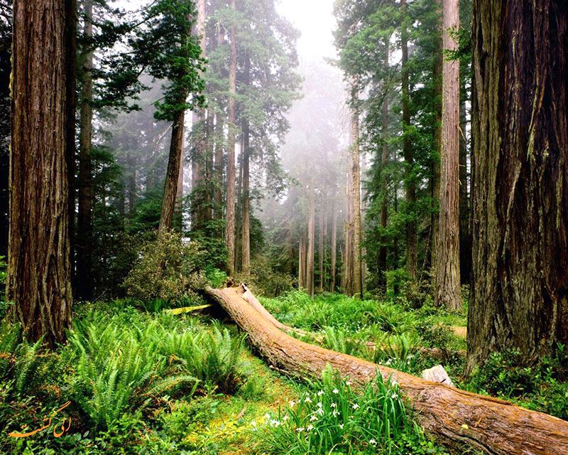 جنگل دالخانی ایران